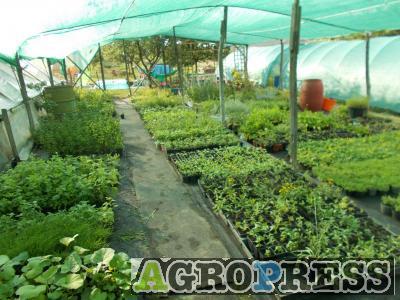 Levendulamama Fűszer- és gyógynövény kert