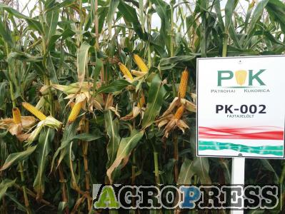 PK-002 Organikus Kukorica előrendelési AKCIÓ! - Rekordereknek! SZEMES/SILÓ HASZNOSÍTÁSRA