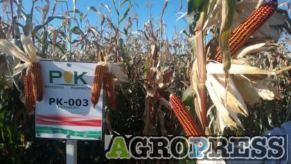PK-003 - Állattartóknak! Organikus kukorica előrendelési AKCIÓ! SZEMES/SILÓ HASZNOSÍTÁSRA